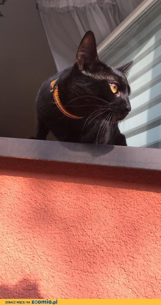 Domowy Kot