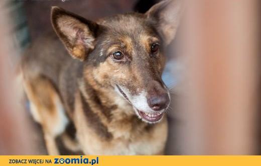 Dona - cudna, stateczna psia dama ,  łódzkie Łódź