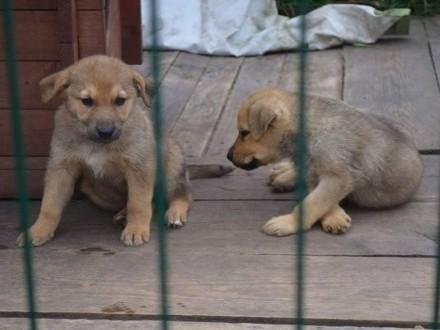 Psia rodzina, suczka i trzy SZCZENIAKI PILNIE do adopcji!
