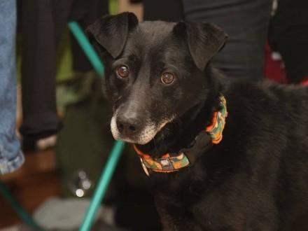 Otto - idealny  zwykły  niezwykły psiak do adopcji!