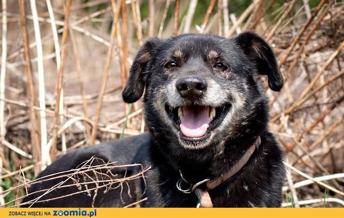Ideał psa-Władzio