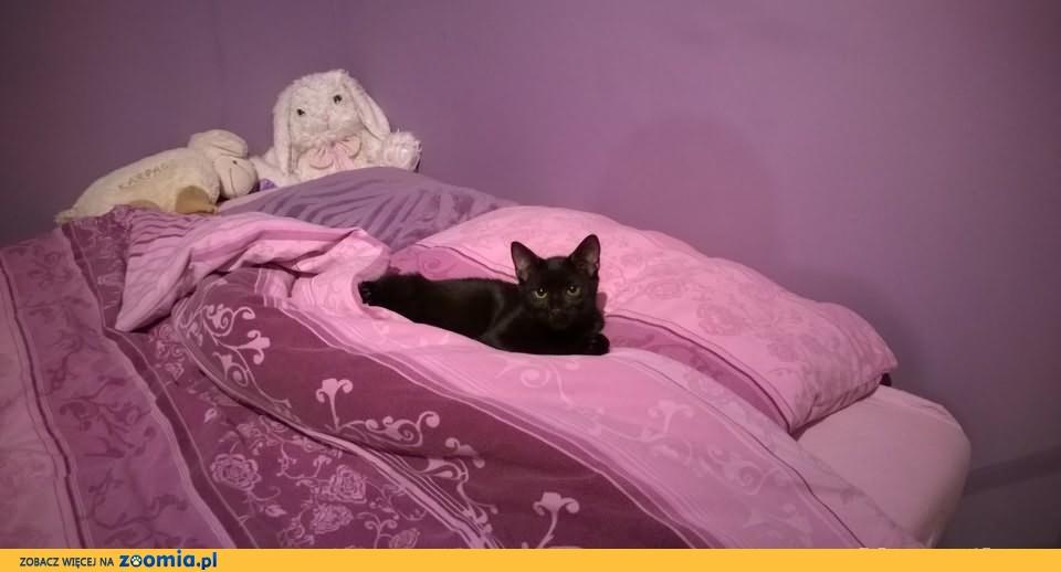 Wyjątkowy, czarny kocurek Rimbo jako towarzysz dla Twojego kota