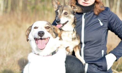 Iskierka i Bąbelek - takiej psiej przyjźni jeszcze nie widziałeś! Oba psiuńki do adopcji! FILMIKI   dolnośląskie Wrocław