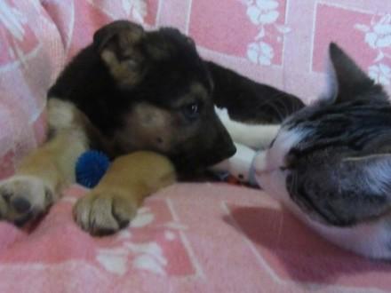 Zorka 3 miesięczna sunia adopcja