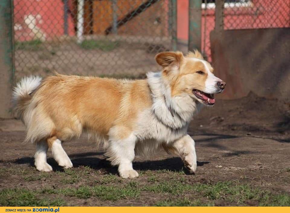 MISIU młody psiak kochający ludzi i świat marzy o domku gdzie zazna szczęścia i miłości ,  Kundelki cała Polska