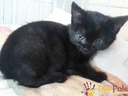 DRABINKA-miła  malutka czarna koteczka-szukamy troskliwego domu  adopcja