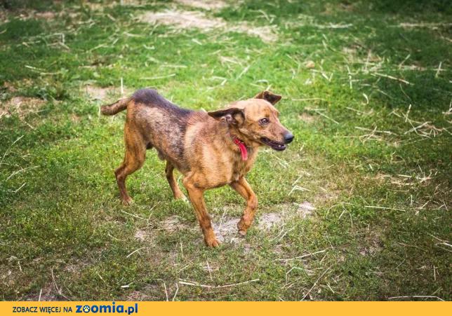 Rupi - nieduży, niekonfliktowy psiak szuka kochającej rodziny!