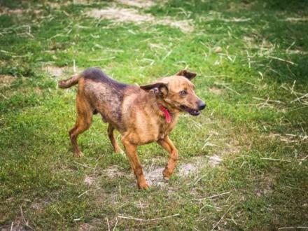 Rupi - nieduży  niekonfliktowy psiak szuka kochającej rodziny!