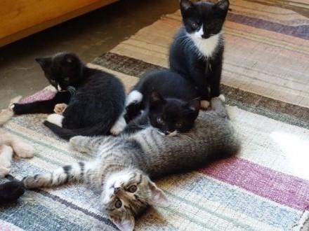 oddam w dobre ręce wspaniałe kociaki