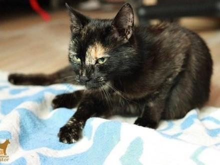 Sigma obłędnie urocza, towarzyszka kocica, szylkretka!