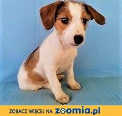 Łatka i Mamba - dwie, 3 miesięczne szczeniaczki szukają domów,  mazowieckie Warszawa