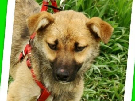 Radosny  mały 10 kg  młody psiak HOX towarzyski łagodny_Adopcja