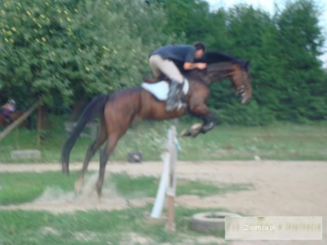 Nauka jazdy konnej, treningi sportowe