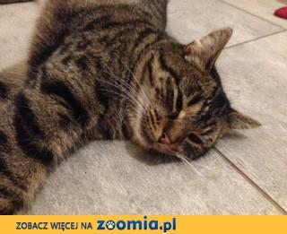 Zaginęła kotka - Proboszczewice