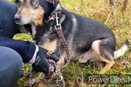 FRANUŚ - biedny  starszy psiak  gaśnie w schronisku POMOCY!   mazowieckie Warszawa