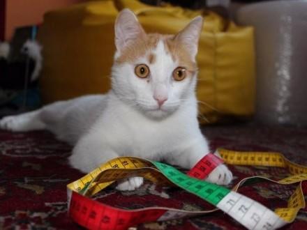 Długi  cudowny kot rudzielec szuka domu!