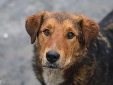 Kapral  młodziutki  przyjazny pies  poznaj go i zakochaj się!
