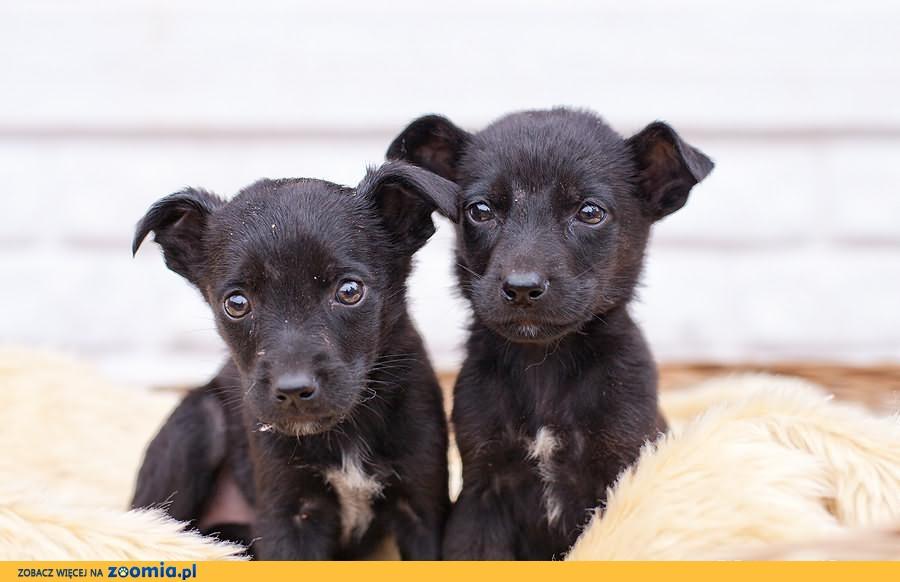 6 szczeniaczków czeka w przytulisku na domy, Pilnie!