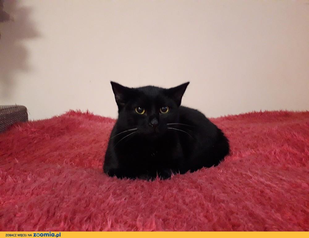 Koteczka Czarnusia szuka domu