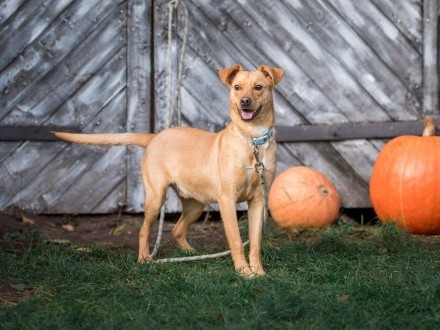 Rubin  młodziutki  kochany psiak szuka domu!