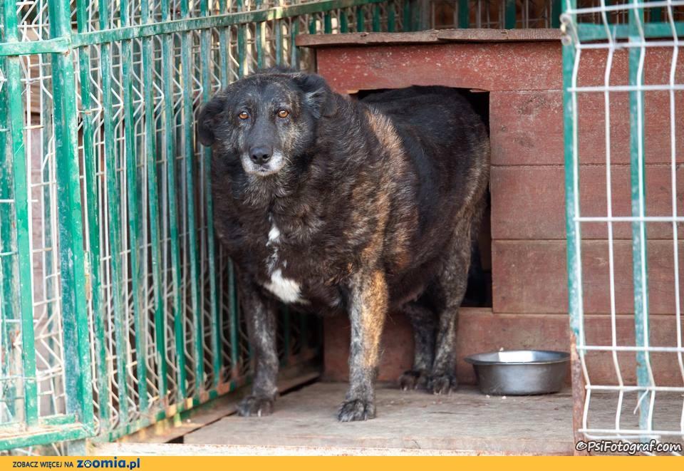 Alfa - najstarszy psiak w schronisku czeka na dom