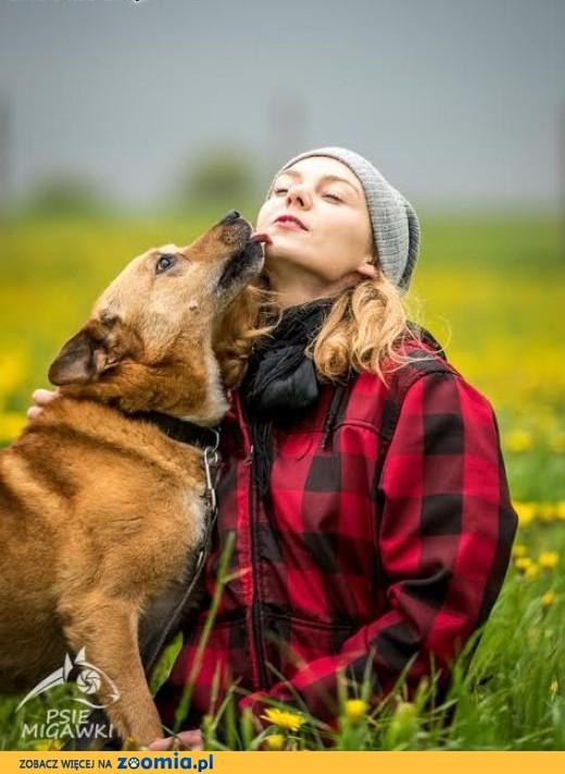 Fajny pies z MARIUSZA jest :D,  świętokrzyskie Kielce