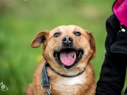 Fajny pies z MARIUSZA jest :D   świętokrzyskie Kielce
