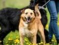 'Fajny pies z MARIUSZA jest :D,  świętokrzyskie Kielce