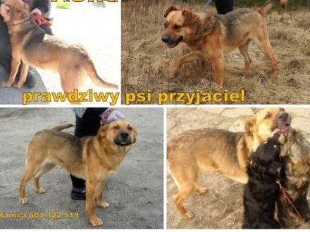Asik-kochany  młody psiak bardzo che mieć swój dom   małopolskie Wadowice