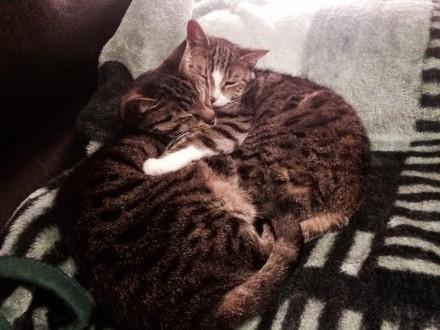 Dwie dorosłe kotki: Zołza i Gapa szukają domu