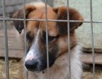 Sopelek-niewidomy psiak potrzebuje odpowiedzialnego domu!