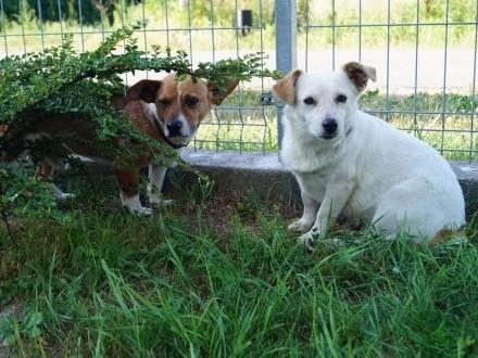 Niewielkie, młode i grzeczne - Basia i Maciuś do wspólnej adopcji!