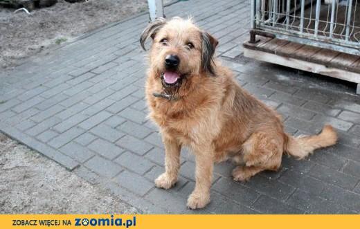Idealny pies podwórkowy Deker,  dolnośląskie Wrocław