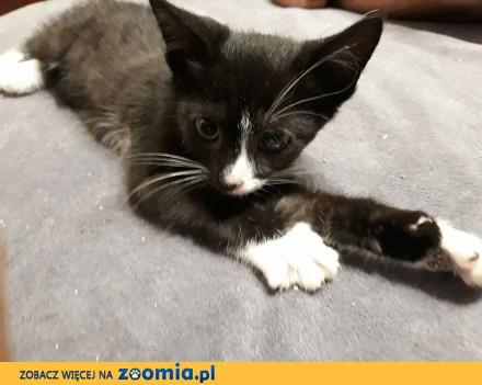 Koteczka Śrubka szuka domu