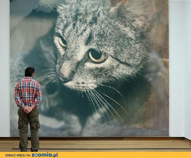 Kotka o cudownym charakterze, drobna, śliczna i kochana – Animka