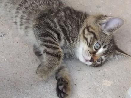 Oddam koteczki za koszty odchowania   dolnośląskie Wałbrzych
