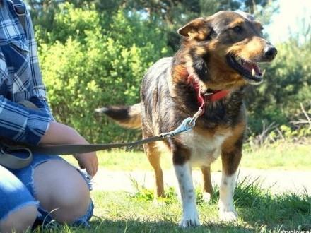 GABRYSIA - cudna psia dama