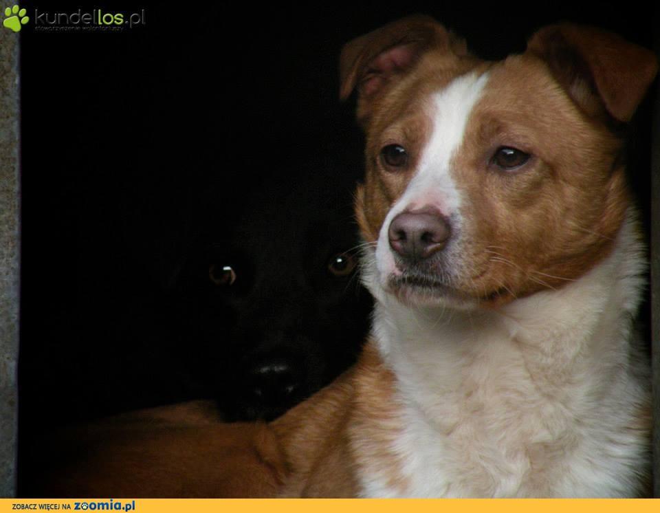 Tarzan i Perełka, cudowna psia parka szuka domu!