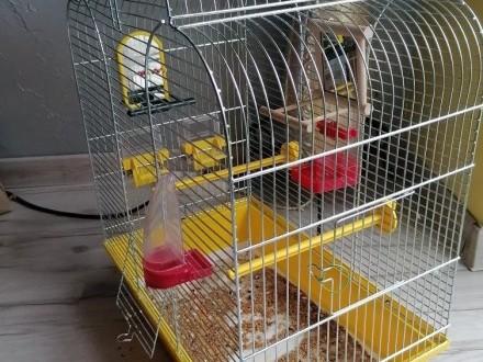 Klatka dla papug + wyposażenie