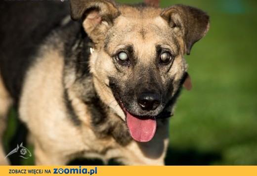 MIKOŁAJ - fajny z niego pies, choć niewidomy jest. ,  dolnośląskie Wrocław