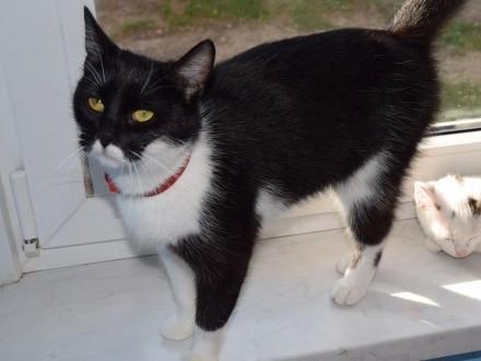 Jeżynka  przyjazna koteczka  młodziutka  wesoła ADOPCJA
