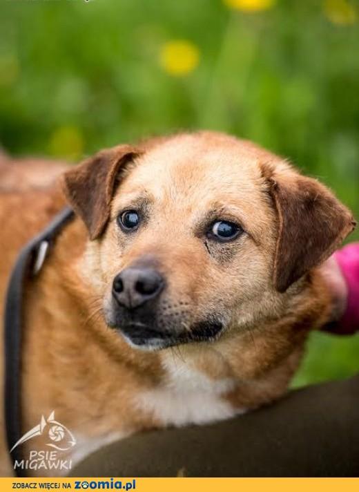 MARIO - wyjątkowy pies - pokochaj i adoptuj go - przecież tego chcesz :),  mazowieckie Warszawa
