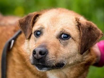 MARIO - wyjątkowy pies - pokochaj i adoptuj go - przecież tego chcesz :)   mazowieckie Warszawa