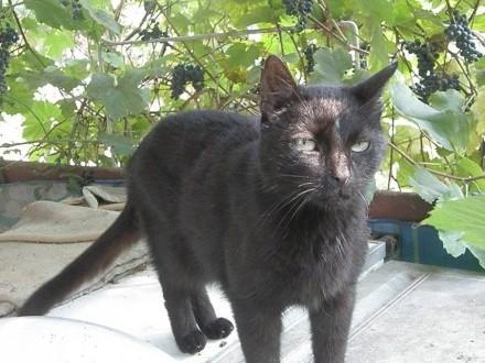 Kizia starsza kotka szuka domu