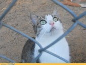 Panna Migotka, ciekawska kotka z wielkimi oczami