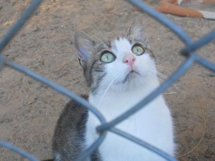 Panna Migotka  ciekawska kotka z wielkimi oczami