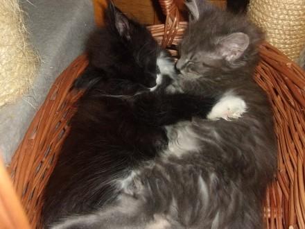 Kotki MCO z   Koci Świat MCO