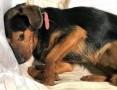 ATOS - 1,5 roczny, wrażliwy psiak w typie terriera szuka domu!,  mazowieckie Warszawa