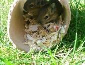 Małe wiewióry,  łódzkie Łódź