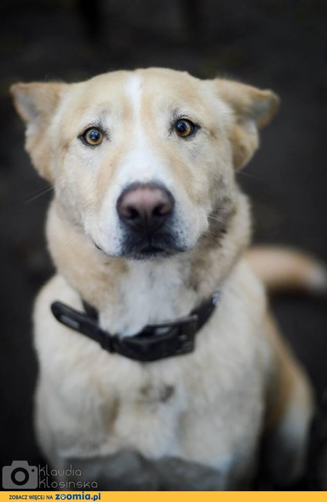 Duży, niezwykły Marcel - wspaniały pies szuka domu z ogrodem!